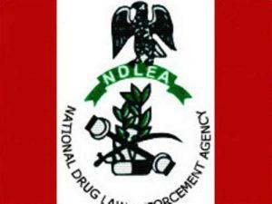 ndlea official logo